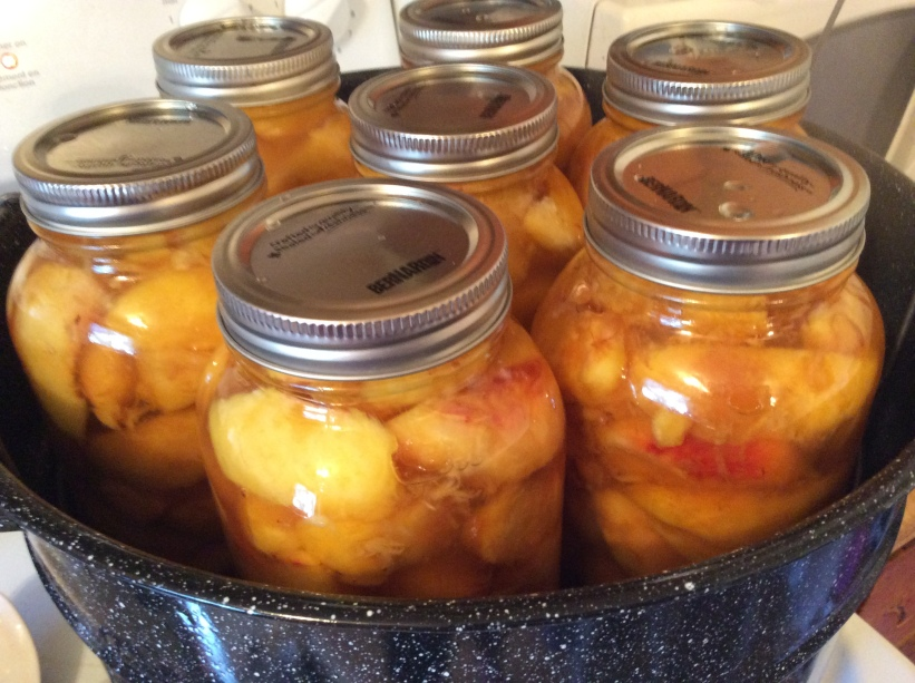 Peaches I Canned in 2015